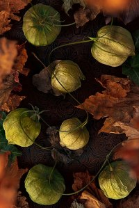 Tomatillos and fall leaves